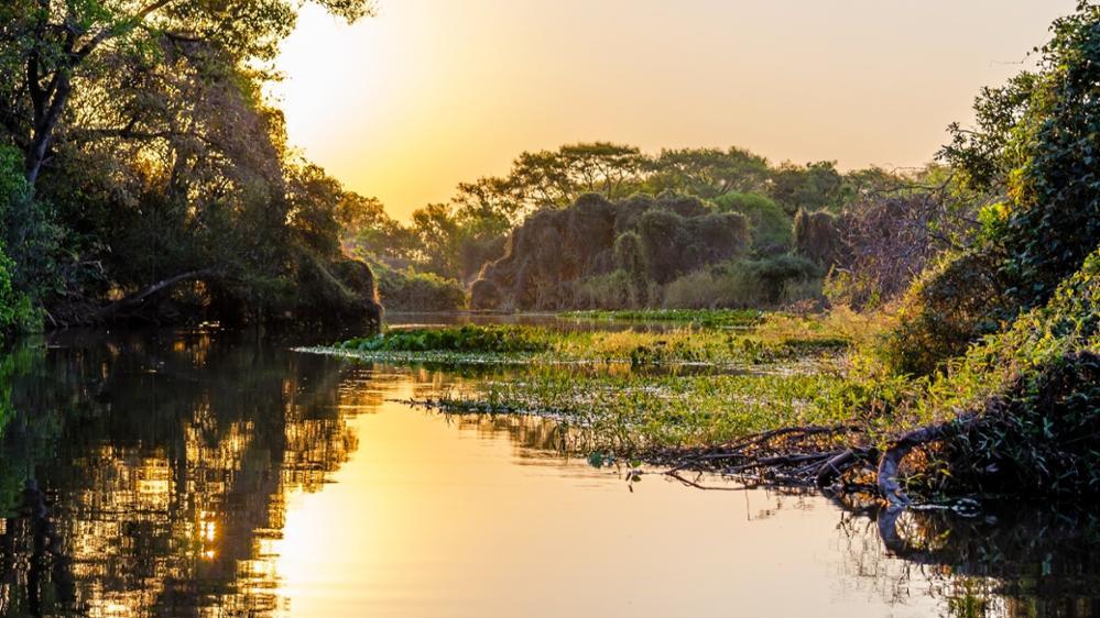 Le Pantanal, la plus belle réserve naturelle d'animaux sauvages du Brésil